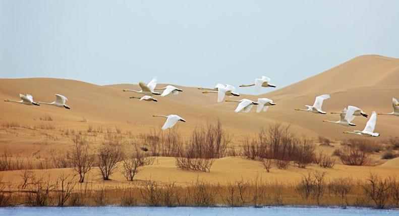 【随心·自由行】内蒙古七星湖沙漠观星、鄂尔多斯草原、奢华五星入住体验双飞|乐享骑士时光